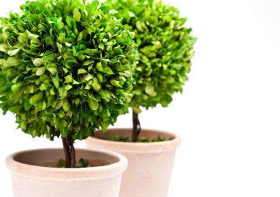 Assortimento mebo flor giardineria giardineria bozen for Piante da giardino sempreverdi resistenti al freddo