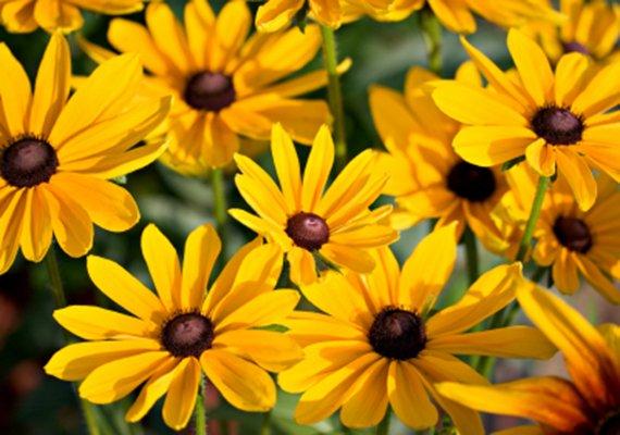 Assortimento mebo flor giardineria giardineria bozen for Fiori per balconi soleggiati